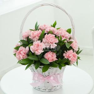 핑크로즈 p251