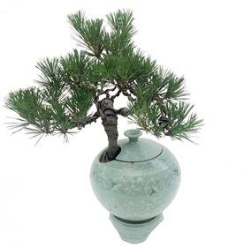 도자기소나무분재m602