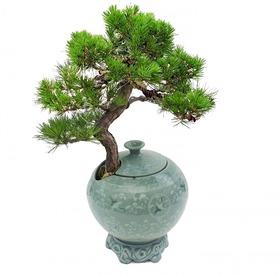 도자기소나무분재m615